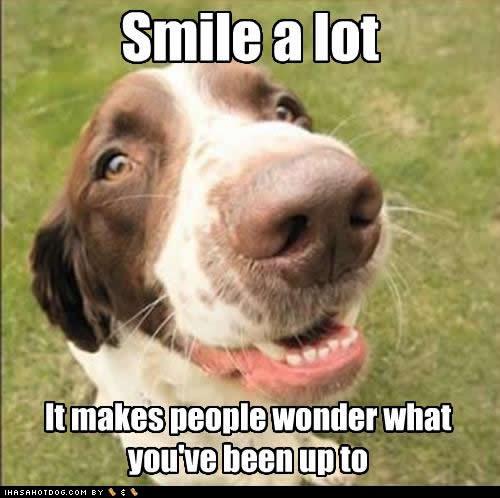 O Local do BOM DIA \ BOA TARDE\ BOA NOITE...! ( COM IMAGENS DA NET ) - Página 4 Funny-dog-pictures-smile-wonder
